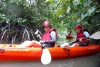 Mangrove Kayaking -  Adults
