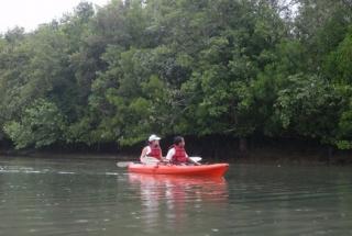 Mangrove Kayaking Adventure - Kids (12 Years and under)